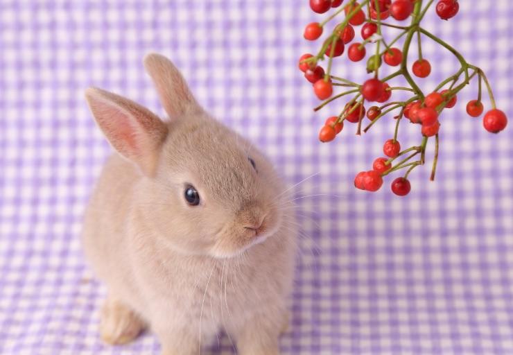 撮影メニュー:動物撮影